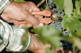 Vins el Cep Viticultura